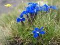 ispir yedigöllerde çiçek