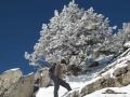 karınca dağında karlı ağaç